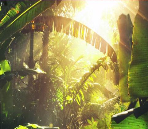 REDD - Rainforest